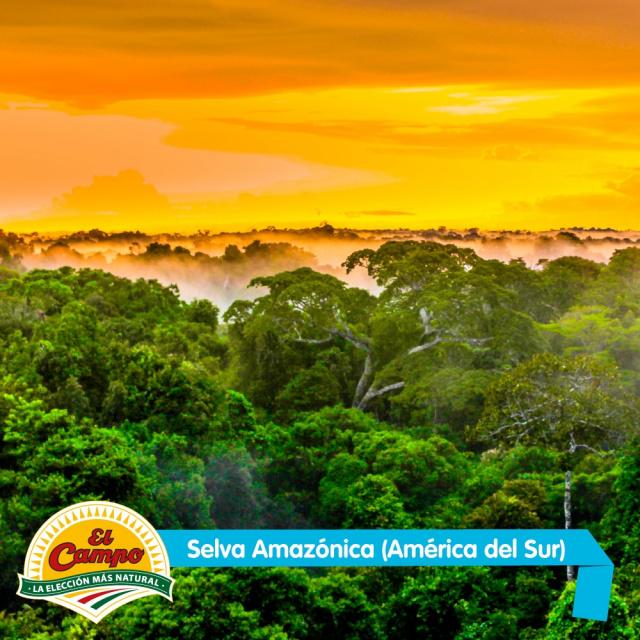 Septiembre: Selva Amazónica (América del Sur)